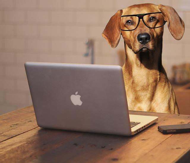 Dá sa nájsť práca cez internet?